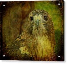 Red-tailed Hawk II Acrylic Print by Sandy Keeton