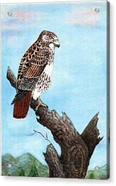 Acrylic Print featuring the painting Red Tailed Hawk by VLee Watson