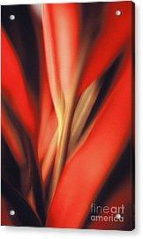 Red Ti Acrylic Print by Ranjini Kandasamy