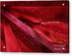Red Ti The Queen Of Tropical Foliage Acrylic Print by Sharon Mau