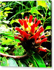 Red Torch Ginger Flower One Acrylic Print by Tina M Wenger