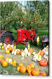 Acrylic Print featuring the photograph Red Tractor Under The Gourds by Joyce Gebauer