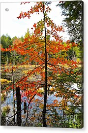 Red Tree At Waters Edge Acrylic Print by Linda Marcille
