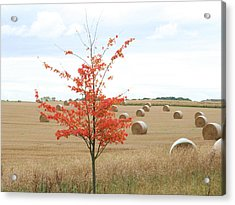 Acrylic Print featuring the photograph Red Tree by Elizabeth Lock