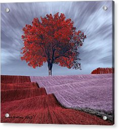 Acrylic Print featuring the painting Red Tree In A Field by Bruce Nutting