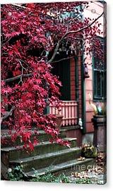 Red Tree Acrylic Print by John Rizzuto