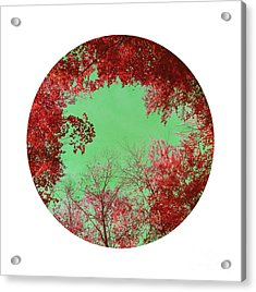Red Trees Acrylic Print by Angela Bruno