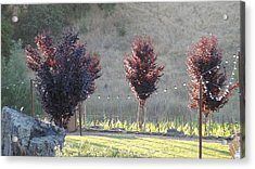 Red Tree's Acrylic Print by Shawn Marlow