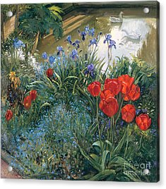 Red Tulips And Geese  Acrylic Print by Timothy Easton