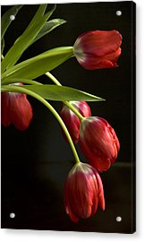 Red Tulips Acrylic Print by Cindy Rubin