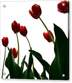 Red Tulips From The Bottom Up Vl Acrylic Print by Michelle Calkins
