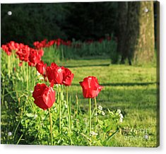 Acrylic Print featuring the photograph Red Tulips by Jose Oquendo