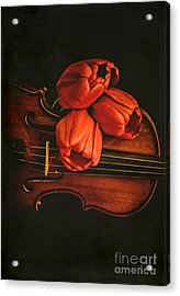Red Tulips On A Violin Acrylic Print