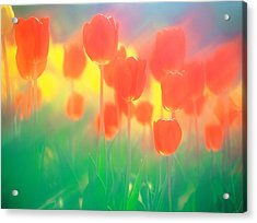 Red Tulips Acrylic Print by Panoramic Images