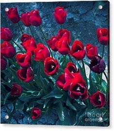 Red Tulips Acrylic Print