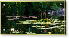 Red Water Lily In A Tropical Pond Acrylic Print by Julio Solar