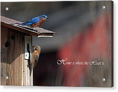 Red White And Blue Birds Acrylic Print by Michael Rucci