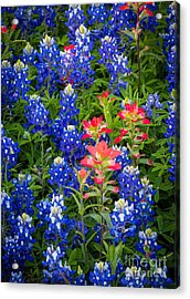 Red White And Blue Acrylic Print by Inge Johnsson