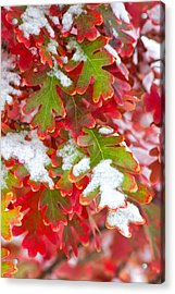 Red White And Green Acrylic Print