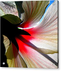 Red White N Black Acrylic Print