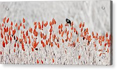 Red-winged Blackbird Acrylic Print by Steven Ralser