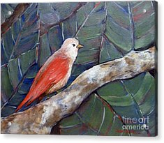 Red Winged Acrylic Print
