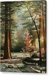 Redwood Forest Acrylic Print by Cecilia Brendel