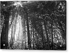 Red Woods 2 Acrylic Print