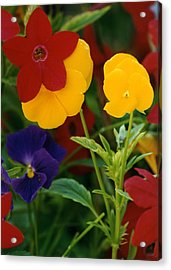 Red Yellow Purple Flowers Acrylic Print by Robert Lozen