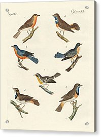 Redbreasts Bluethroats And Yellowthroats Acrylic Print by Splendid Art Prints