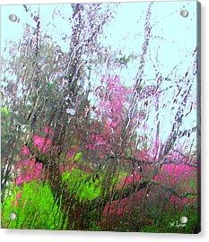 Redbud Trees Acrylic Print