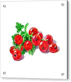 Redcurrant Acrylic Print