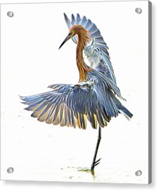 Acrylic Print featuring the digital art Reddish Egret 1 by William Horden