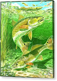 Redfish Haven In0018 Acrylic Print by Carey Chen