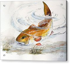 Acrylic Print featuring the painting Redfish by Sibby S