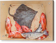 Redfish, Skate And Trout Freshly Acrylic Print