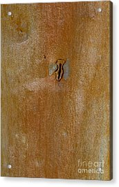 Redgum Tree Acrylic Print by Steven Ralser