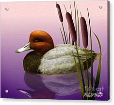 Redhead And Cattails Acrylic Print