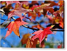 Reds Of Autumn Acrylic Print by Kaye Menner