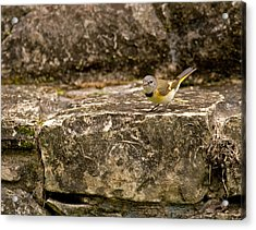 Redstart In Ruins Acrylic Print