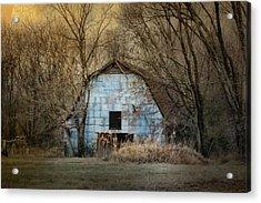 Redtail At The Blue Barn Acrylic Print by Jai Johnson