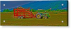 Redwood Ca Acrylic Print by Richard J Cassato
