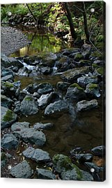 Redwood Creek Acrylic Print