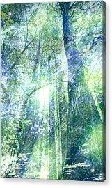 Redwood Dreams Acrylic Print by Nicole Swanger
