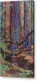 Redwood Picnic Acrylic Print by Cheryl Myrbo