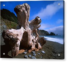 Redwood Roots Acrylic Print by Ray Mathis