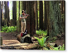 Redwood Symphony   Acrylic Print