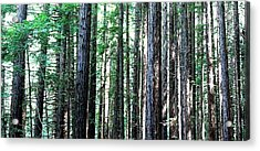 Redwoods 2 Acrylic Print by Greg Thiemeyer