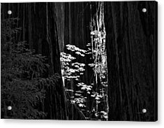 Redwoods Light And Texture Acrylic Print by Leland D Howard