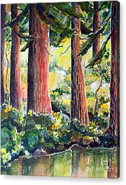 Redwoods Acrylic Print by Terry Banderas